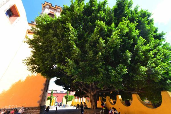 San Miguel de Allende4